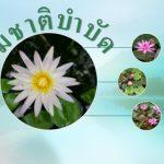 naturopathy-picturee